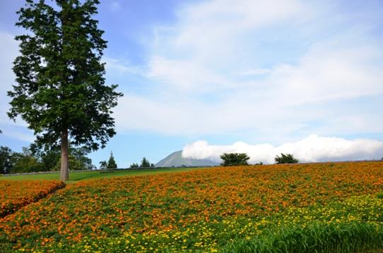 花の丘・昼9561.jpg