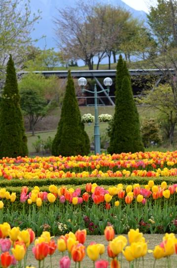 花回廊のチューリップ4014.jpg