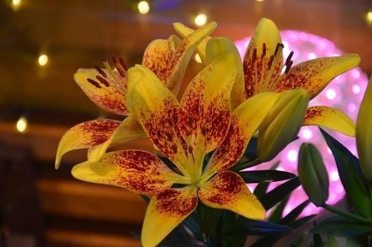 花回廊のユリ6869.jpg