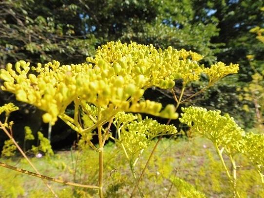 花回廊の秋の花1300380.jpg