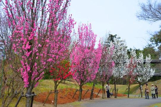 花回廊・テルテモモ0412.jpg