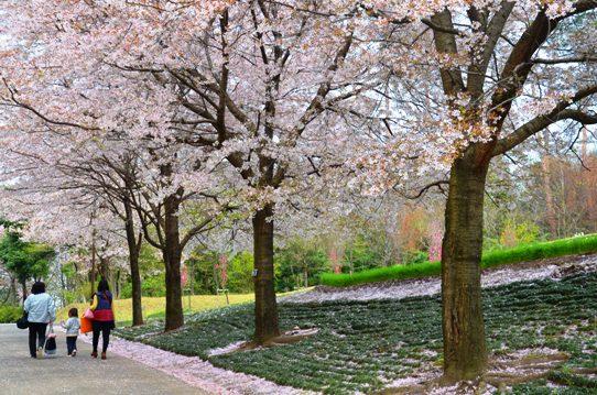 花回廊桜広場0438.jpg