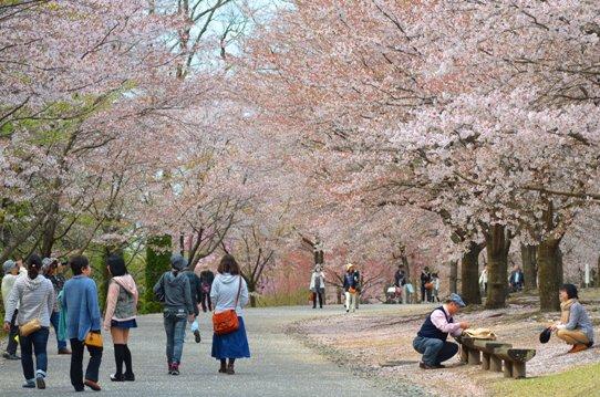 花回廊桜広場0615.jpg