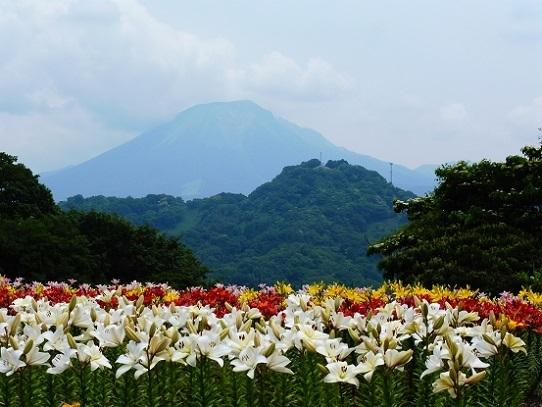 花風景・ゆり1270051.jpg