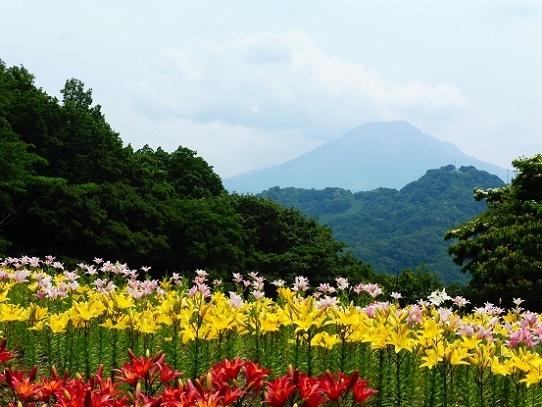 花風景・ゆり1270053.jpg