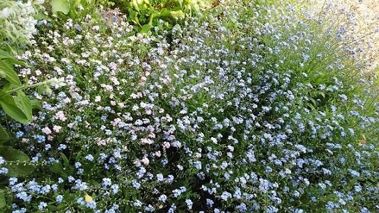 英国庭園0212.jpg