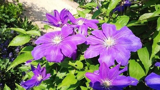 英国庭園0216.jpg