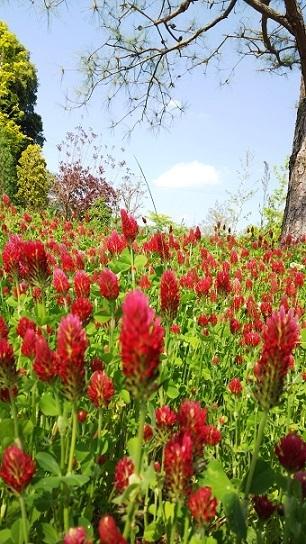 英国庭園0223.jpg