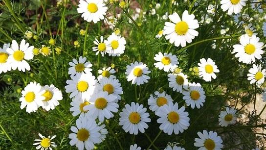 英国庭園0227.jpg