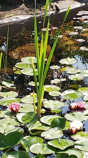 英国庭園0230.jpg
