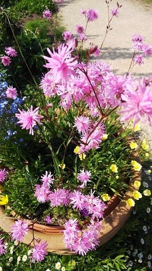 英国庭園0231.jpg