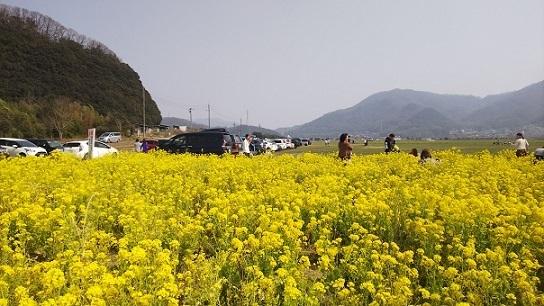菜の花0221.jpg