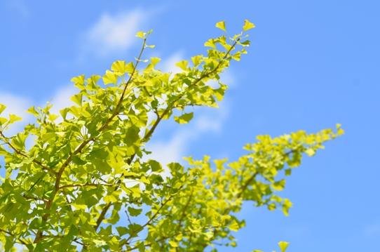 蒜山の空と緑3189.jpg