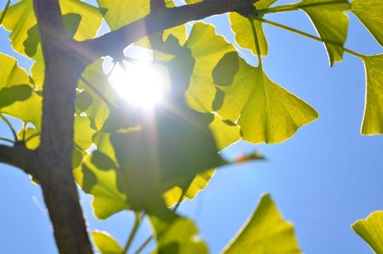蒜山の空と緑3193.jpg