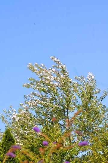 蒜山の空と緑3199.jpg