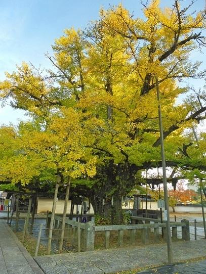 誕生寺1360080.jpg