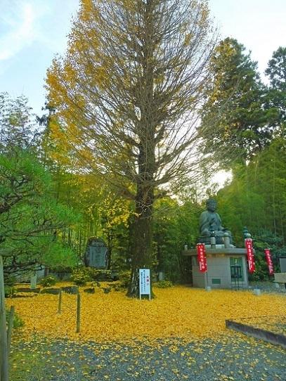 誕生寺1360082.jpg