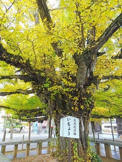 誕生寺1360084.jpg