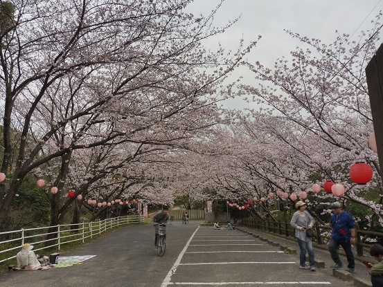 足高山の桜1020203.jpg