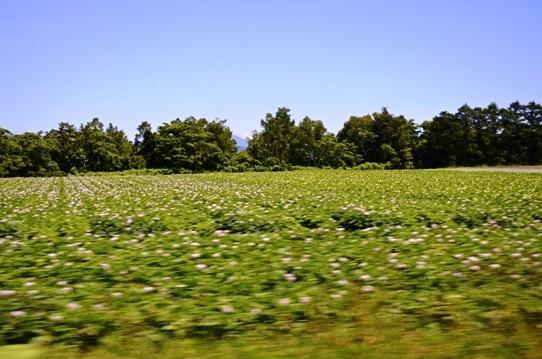 車窓から見たジャガイモ畑4848.jpg
