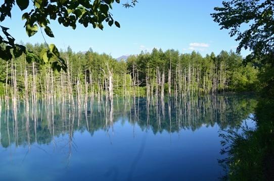 青い池4782.jpg