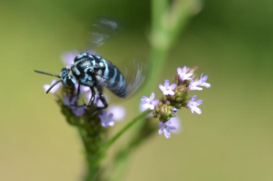 青い虫2743.jpg