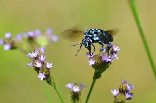 青い虫2745.jpg