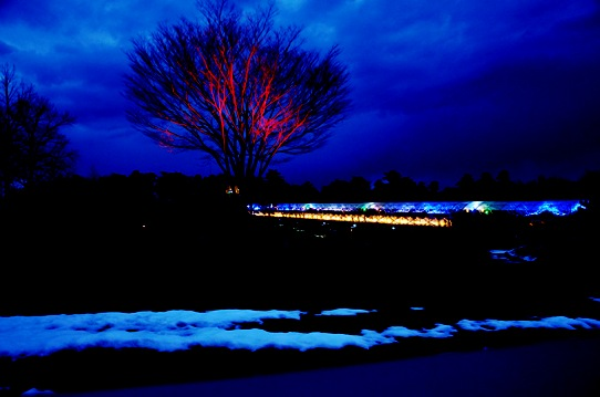 2冬の花回廊8755.jpg