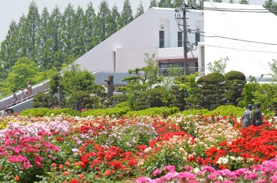 RSKバラ園2088.jpg